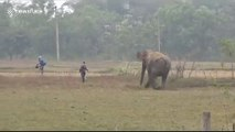'Drunk' Indian man 'taking selfie' miraculously escapes elephant attack