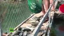 """Miles de peces mueren en el río Éufrates """"en circunstancias misteriosas"""""""