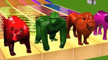 Learn Wild Animals Swimming In Colors Water Slides