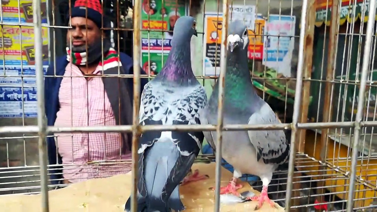 Mirpur 1 number pigeons hat Dhaka Bangladesh 27-12-19