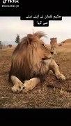 Tik Tok Video Whatsapp Lion Status All Videos Fun