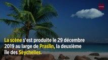 Seychelles : une touriste française mordue par un requin