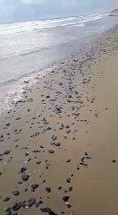 Ressaca do mar traz óleo de volta ao litoral de Itapipoca e Amontada
