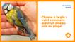 Chasse à la glu : voici comment aider un oiseau pris au piège