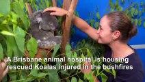 Tennis star Ashleigh Barty visits koalas injured in Australia bushfires