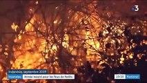 Incendies : une année record pour les feux de forêts