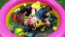 Learn Sea Animals Wild Animals Farm Animals With Toys in Water Pool