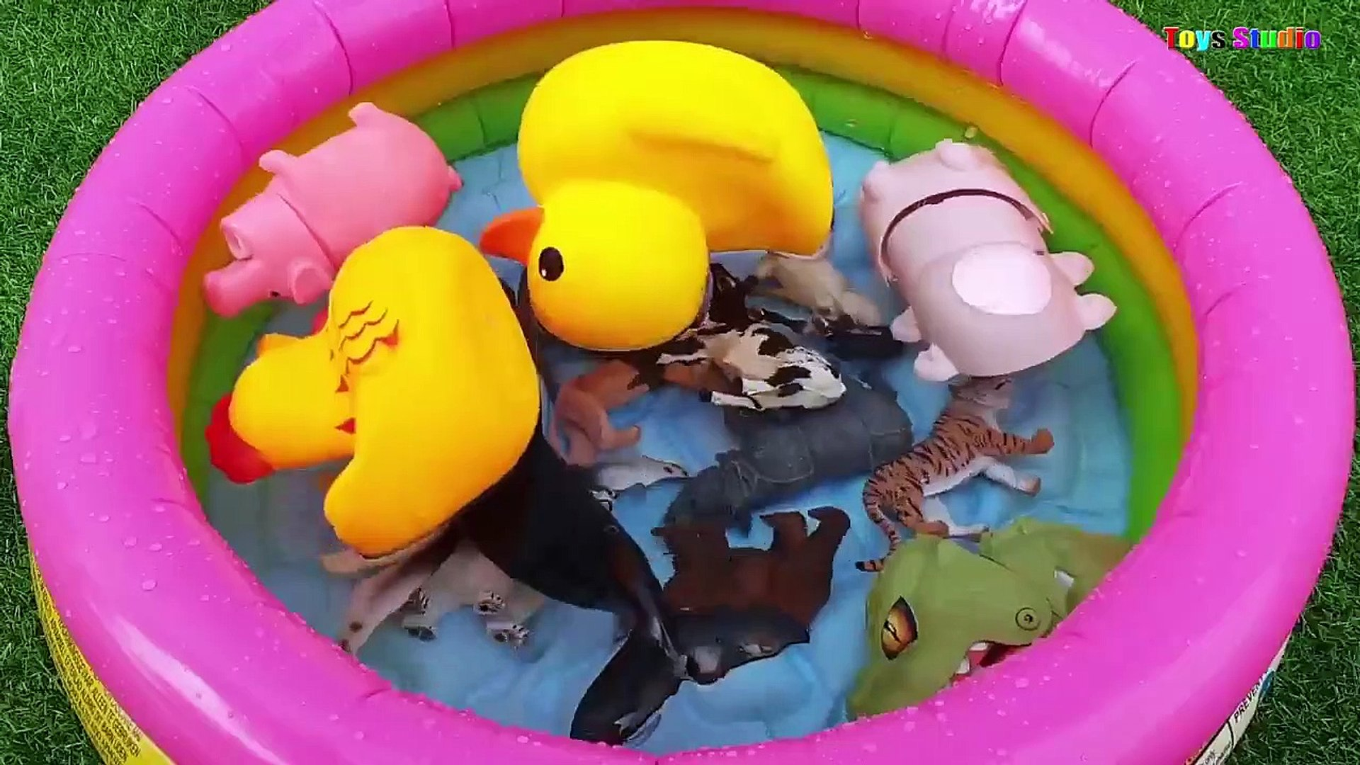 Learn Farm Animals Sea Animals and Wild Animals Names With Water Pool