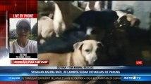 Terendam Banjir, 30 Ekor Anjing Dievakuasi