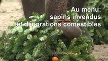 Festin de nöel à base de sapins pour les animaux du zoo de Berlin