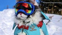 Fashion-forward feline is breaking the internet with snowy adventure photos