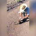 Il sauve un oiseau piégé par un serpent