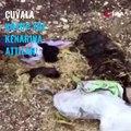 Anne Köpeği Öldürüp Yeni Doğan Yavruları Çuval İçerisinde Ölüme terk edildi