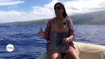 Polynésie Française : Le chant des baleines