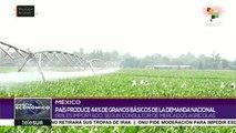 México produce menos cantidad de granos básicos de lo que consume