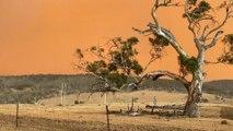Australiens Buschfeuer haben bereits die Fläche Österreichs vernichtet