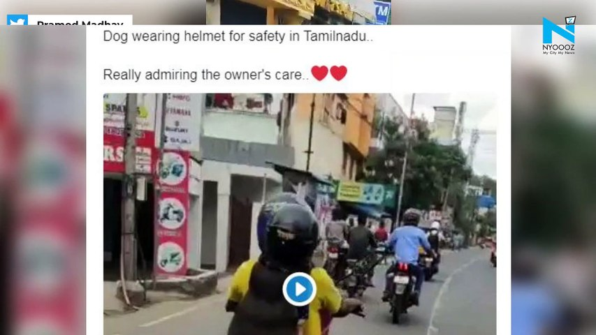 Dog wears helmet, sets road safety examples, video goes viral