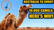 Australia will cull camels as they enter into conflict with aboriginals | Oneindia News
