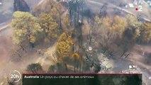 Incendies en Australie : un milliard d'animaux décimés