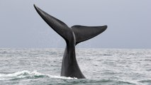 South Africa's Marine Big 5 and where to find them