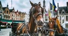 À Rouen, une calèche tractée par un cheval pour remplacer le bus scolaire divise les habitants
