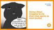 Jenny-Jinya imagine la vie d'un chat après sa mort (suite)