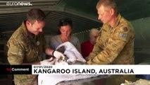 Freiwillige kämpfen ums Überleben von Koalas und Kangurus