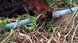 Bombeiros resgata animal em Patos