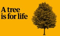 Play your part in the Guardian's charity appeal: a tree is for life – video
