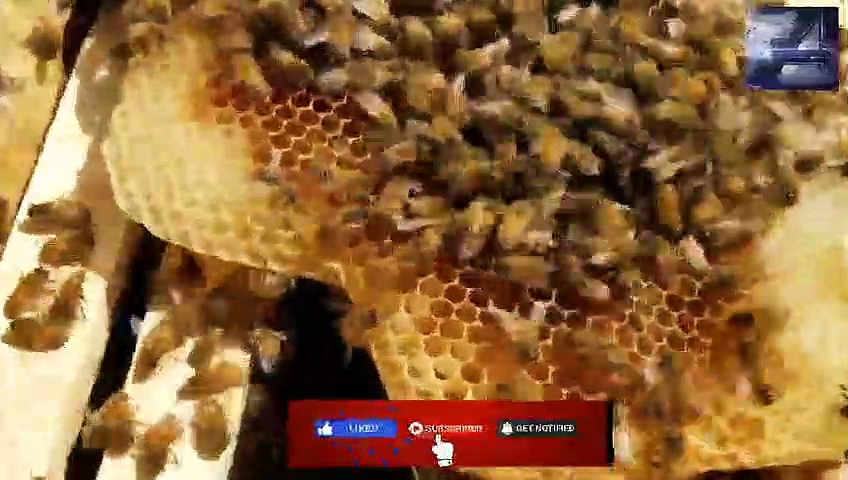 How the bees act when they reject the queen new beekeepers don't miss this
