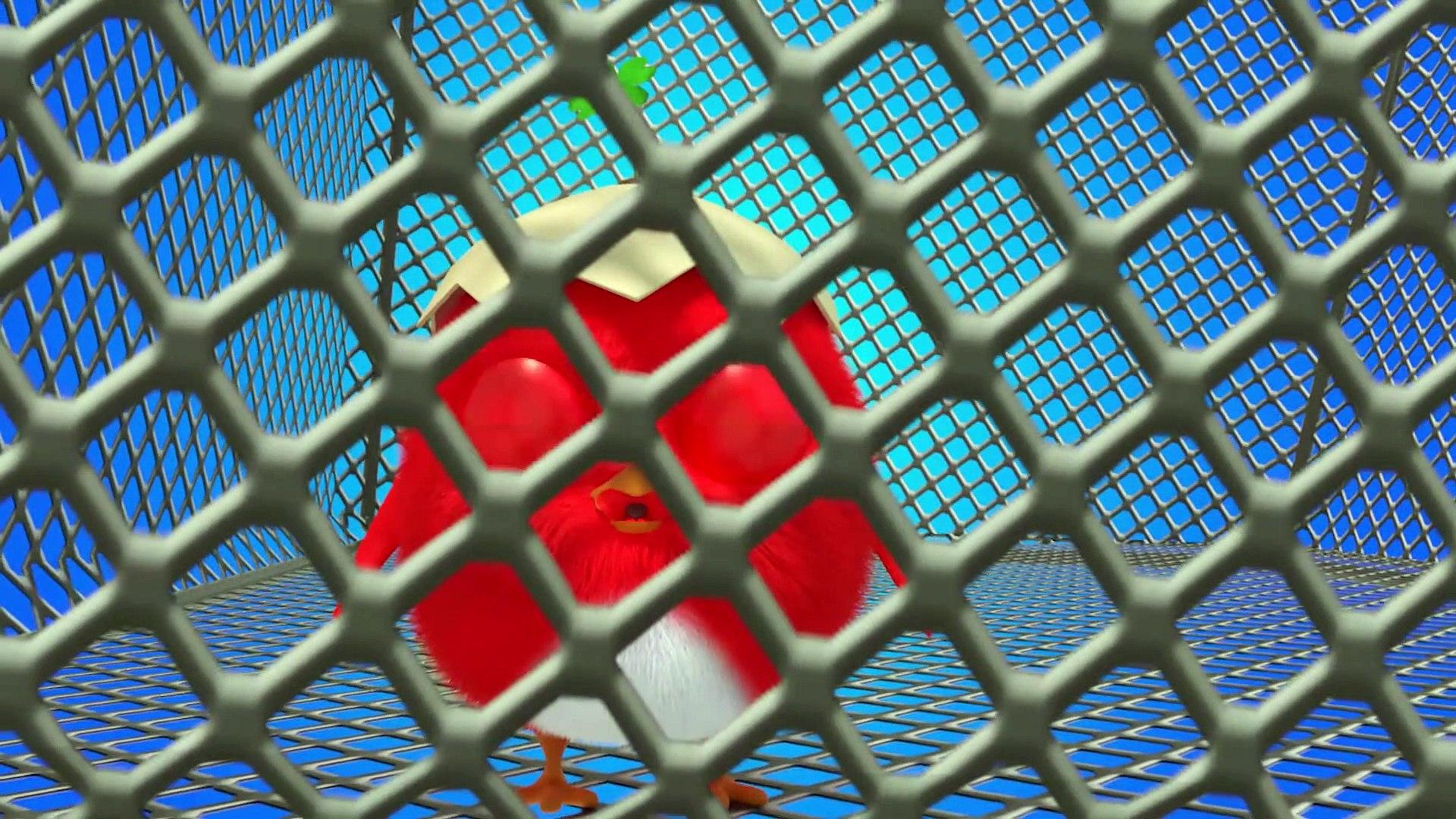 CucKoo Cartoon  Cuckoo Chicken 2019 - Part 3 Drôle de bande dessinée pour les enfants 2020