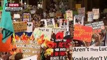 Incendies en Australie : la colère des Australiens face à l'inaction du gouvernement
