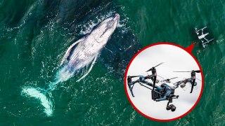 Biologist Explains How Drones Catching Whale