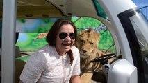 Dans les zoos en Russies vous finissez avec un lion dans la voiture