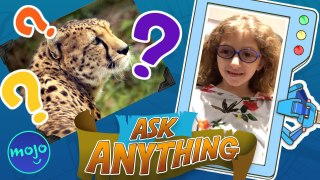Which Animal Is The Fastest?