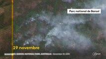Australie : découvrez les forêts décimées par les incendies dans cet avant-après