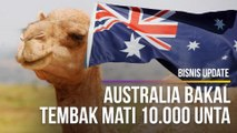 Australia Bakal Tembak Mati 10 000 Unta