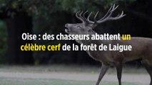 Oise : des chasseurs abattent un célèbre cerf de la forêt de Laigue