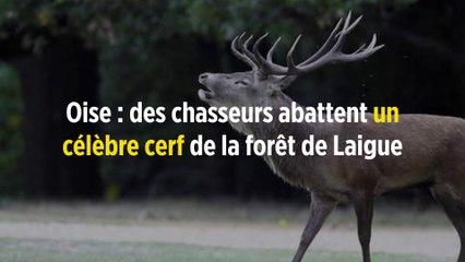 Oise Des Chasseurs Abattent Un Célèbre Cerf De La Forêt De