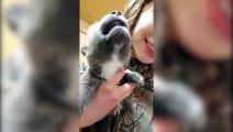 Ecoutez les cris de ce chiot-loup qui hurle pour la première fois