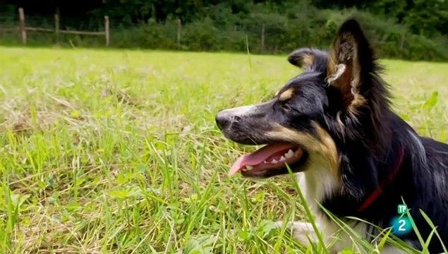 El maravilloso mundo de los cachorros -cap 1 -  Adolescentes -LOS PERROS  - DOCUMENTALES DE ANIMALES - LOS PERROS -  CAHORRITOS - ANIMALES FANTASTICOS - ANIMALES PARA NIÑOS - GRANDES DOCUMENTALES - ANIMALES  - DOCUMENTALES DE LA 2 - DOCUMENTALES