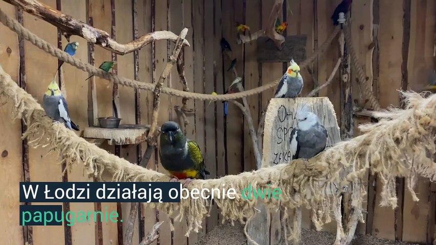 Łódzkie papugarnie