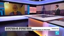 "Loss of animal life from Australian bush fires ""in the billions"""