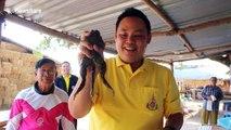 Three-legged frog found in garden pond in Thailand