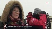 Allemagne : une île de la mer du Nord berceau des bébés phoques