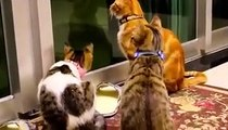 Funny Cats and Kittens Meowing Compilation 2020 - Cats & Kittens Videos Compilation