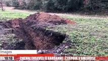Cheval enseveli à Gardanne : l'espoir s'amenuise