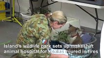Makeshift koala hospital scrambles to save dozens injured in bushfires