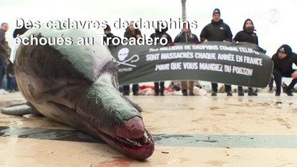 Pêche: des dauphins morts sur la place du Trocadéro