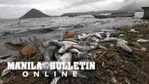 Dead fish were washed ashore in Barangay Buso-Buso in Laurel town, Batangas